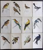 Morris, Francis 1867 Lot of 12 Hand Col Bird Prints