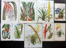 Botanical Prints 19th Cent Mixed Lot of 9 Prints