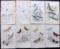 Jardine, William C1840 Lot 8 HC Prints. Insects, Moths