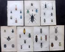 Jardine, William C1840 Lot of 7 Hand Col Prints Beetles