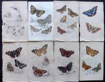 Jardine, William C1840 Lot of 8 HC Prints. Butterflies