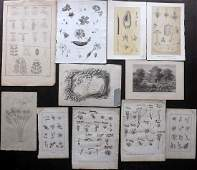 Botanical Prints 19th Cent Mixed Black  White