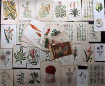 Botanical Prints 19th Cent Mixed Lot of 50