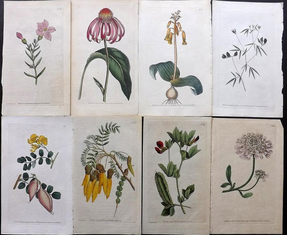 Curtis, William C1790 Lot 8 Hand Col Botanical Prints