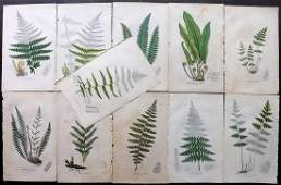 Johnson Charles 1855 Lot of 11 Hand Col Fern Prints