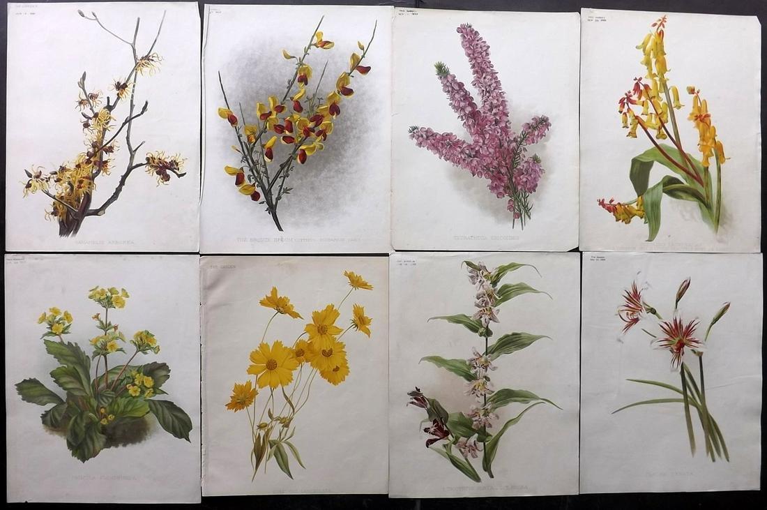 The Garden C1890 Lot of 8 Botanical Prints