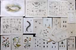 Natural History 19th Cent. Mixed Lot of 30 Prints