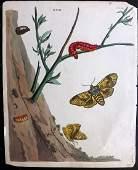Wilkes Benjamin 1824 HC Print Moth  Caterpillar