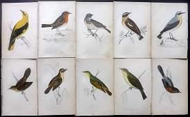 Morris, Francis 1867 Lot of 10 Hand Col Bird Prints
