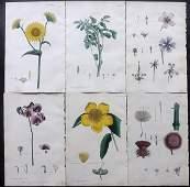 Nodder  Martyn 1817 Lot of 6 HCol Botanical Prints