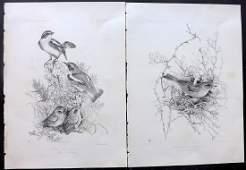 Blackburn, Jemima 1862 Pair of Folio Bird Prints