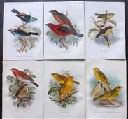 Butler & Frohawk 1904 Lot of 6 Bird Prints