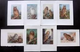Thorburn, Archibald 1931 Lot of 8 Bird Prints. Owls