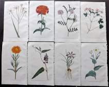 Curtis William 1794 Lot of 8 HCol Botanical Prints