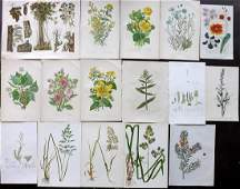 Botanical Prints 19th Cent Mixed Lot of 16