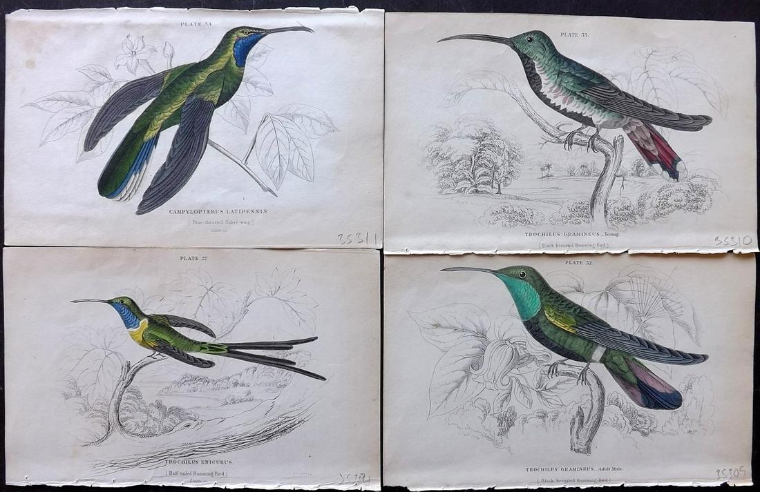 Jardine, William C1840 Lot of 4 HC Hummingbird Prints