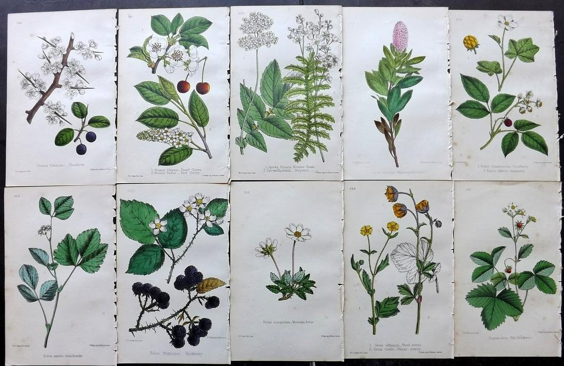 Hogg & Johnson C1870 Lot of 10 HCol Botanical Prints