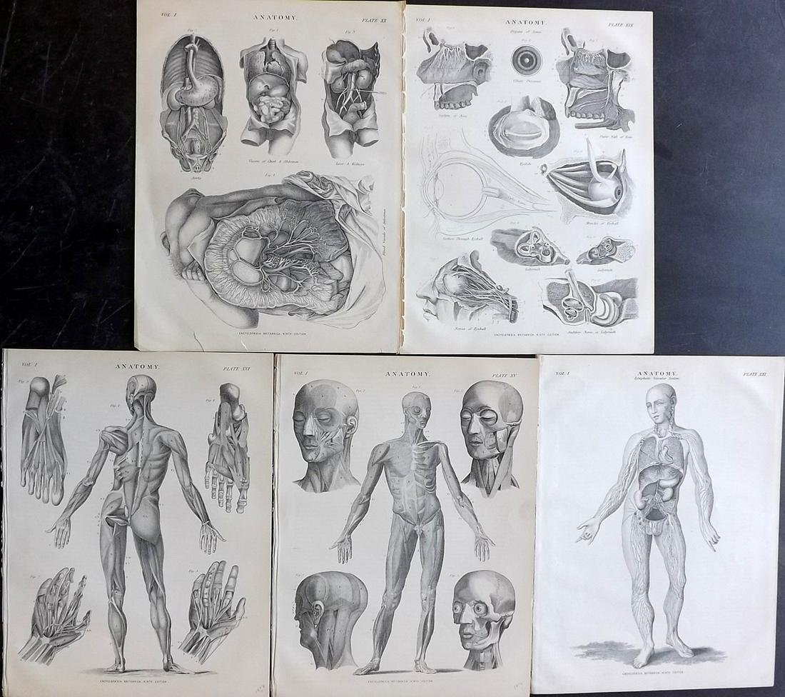 Encyclopaedia Britannica 1878 Lot of 5 Anatomy Prints