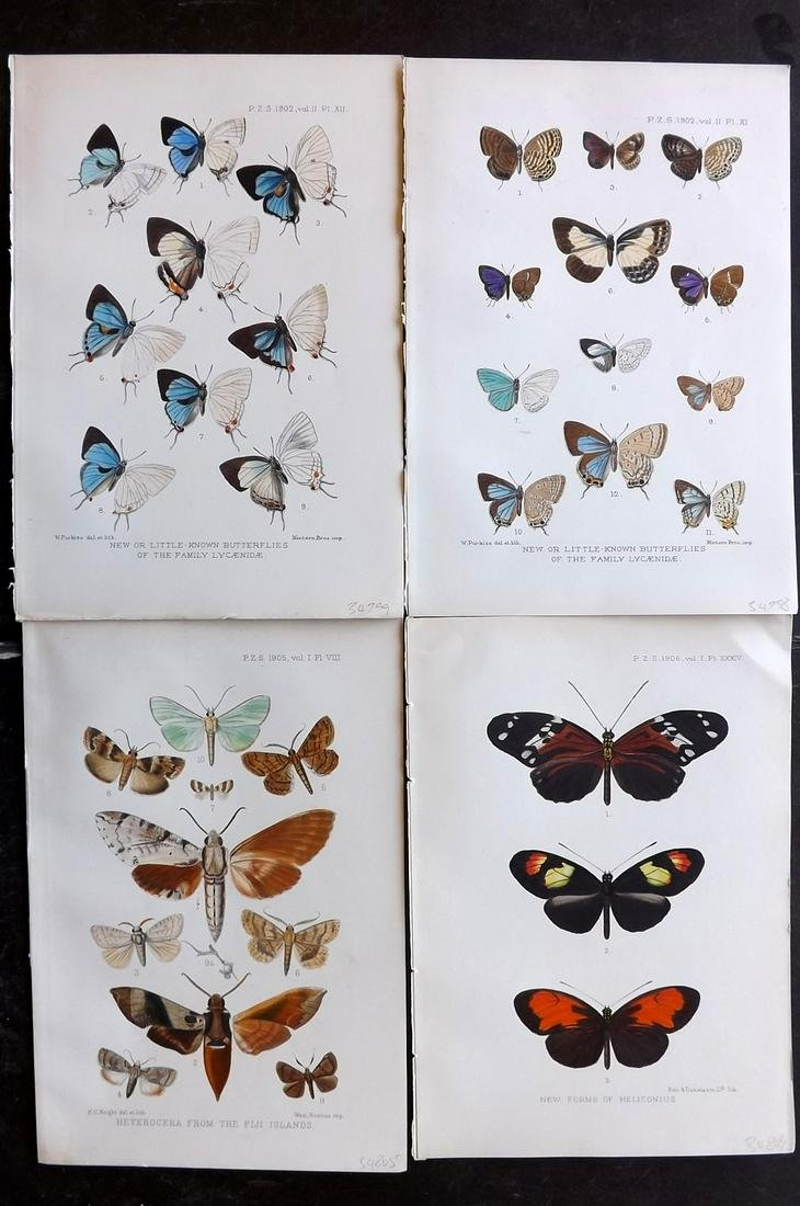 PZS 1902-06 Lot of 4 Hand Col Butterfly & Moth Prints