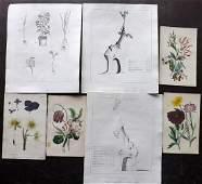 Botanical Prints 17861839 Mixed Lot of 7 Prints