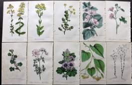 Hogg  Johnson C1870 Lot of 10 HCol Botanical Prints
