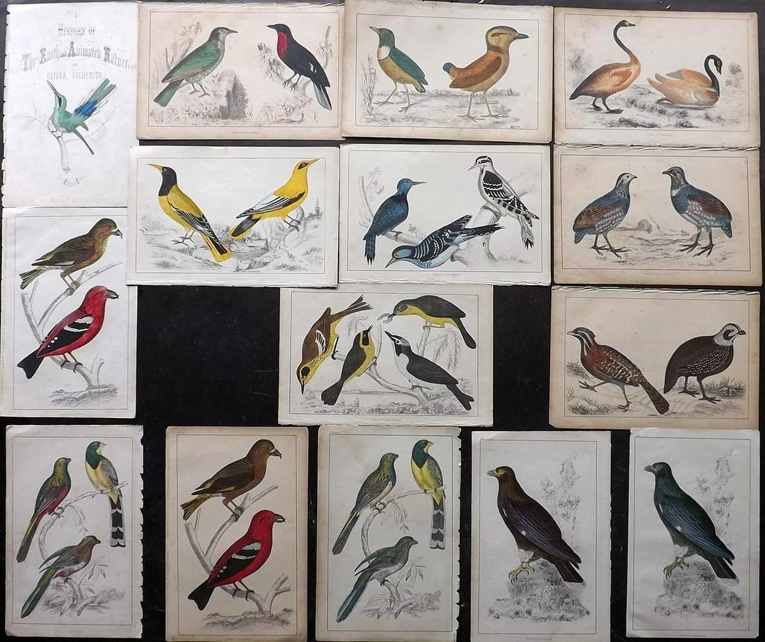 Goldsmith, Oliver C1850 Lot of 15 Hand Col Bird Prints