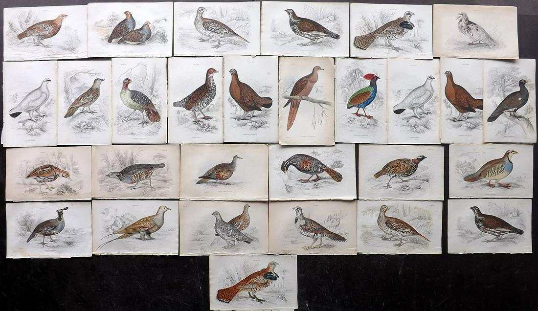 Jardine, William C1840 Lot of 29 Hand Col Bird Prints