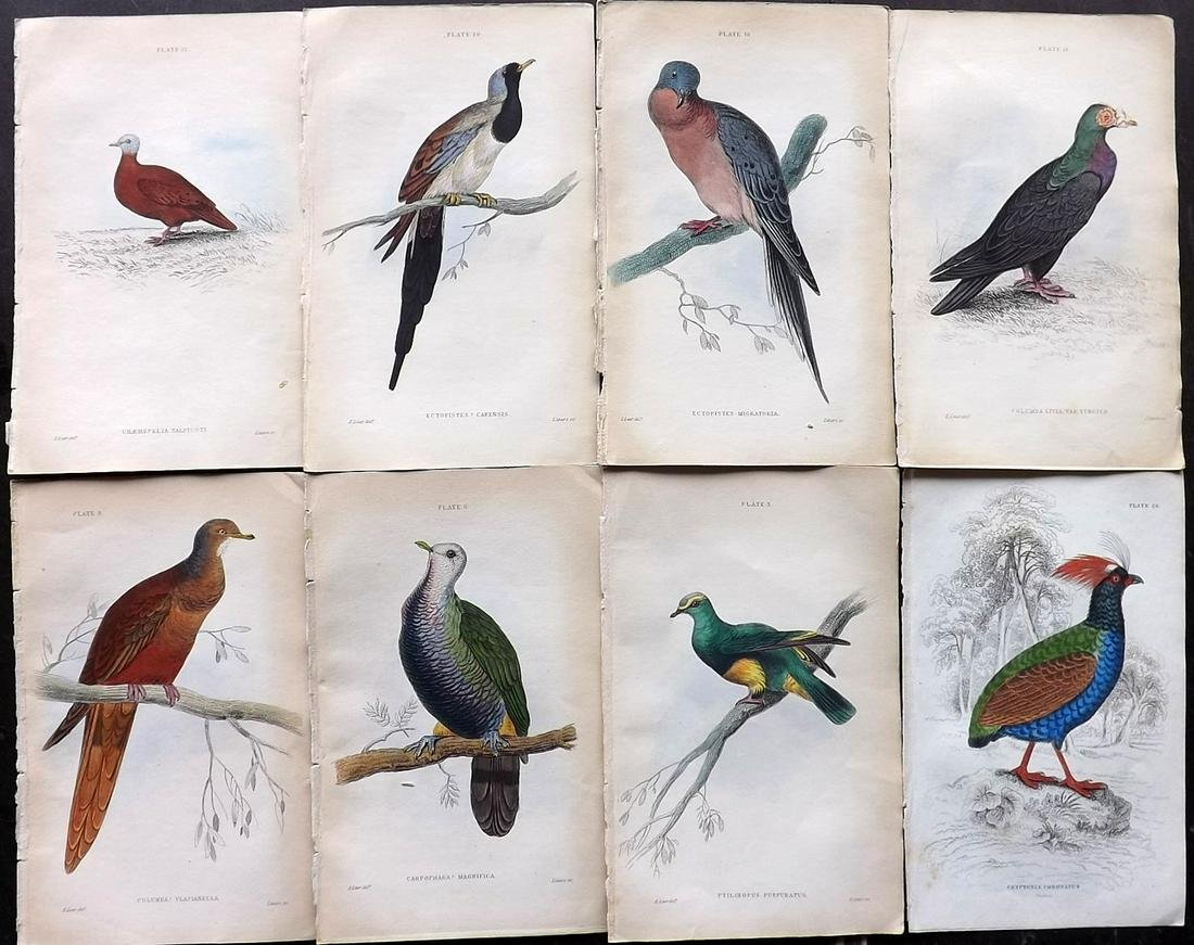 Jardine, William C1840 Lot of 8 Hand Col Bird Prints