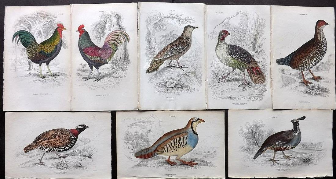 Jardine, William C1840 Lot of 8 Hand Col Bird Prints