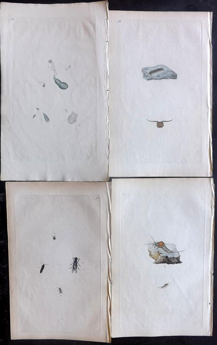 Donovan, Edward 1790's Lot of 4 Hand Col Insect Prints