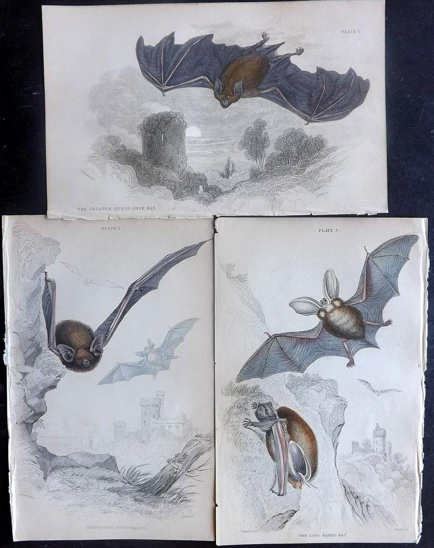 Jardine, William C1840 Lot of 3 Hand Col Prints. Bats