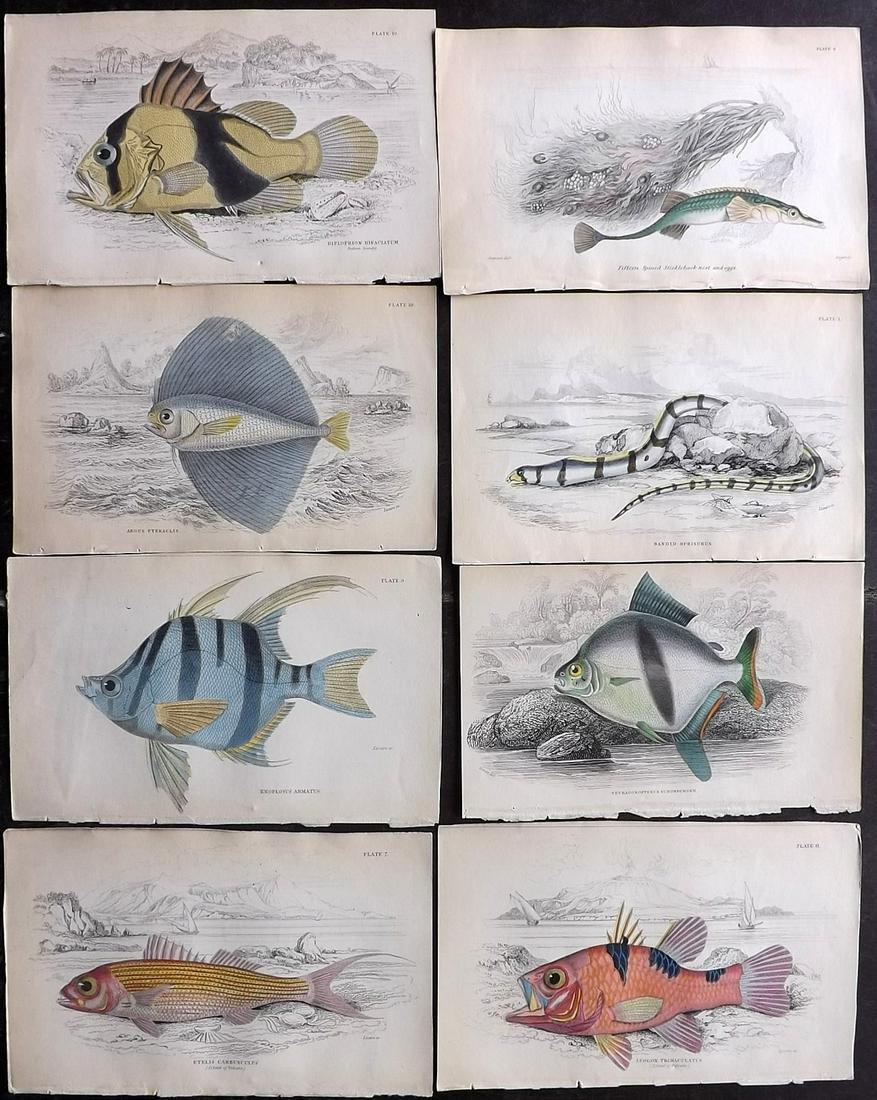 Jardine, William C1840 Lot of 8 Hand Col Fish Prints