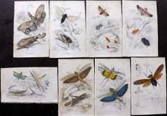 Jardine, William C1840 Lot of 8 Hand Col Prints.