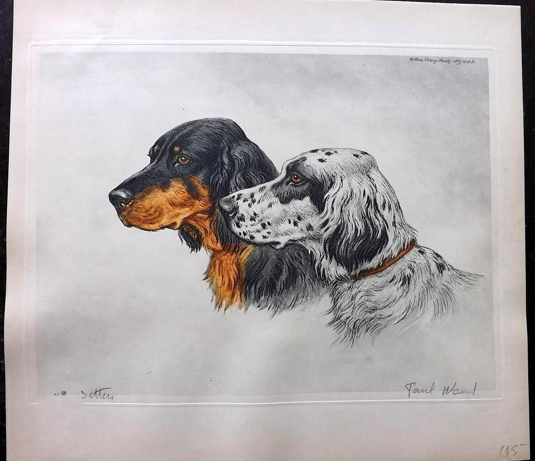 Wood, Paul C1935 Signed Dog Etching. Setters