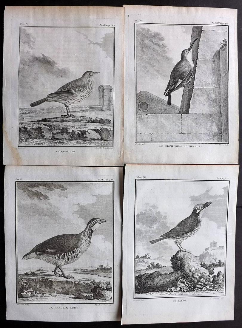 Buffon, Comte de C1770 Lot 4 First Edition Bird Prints