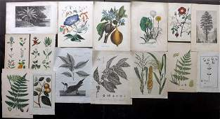 Botanical Prints 19th Cent Mixed Lot of 15 Prints