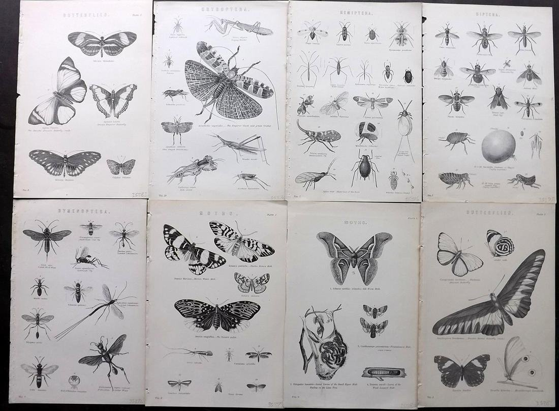 National Encyclopedia C1875 Lot 8 Insects, Butterflies