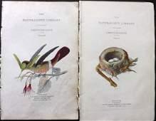 Jardine, William C1840 Pair of HC Prints. Hummingbirds