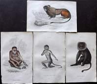 Jardine, William C1840 Lot of 4 Hand Col Prints Monkeys