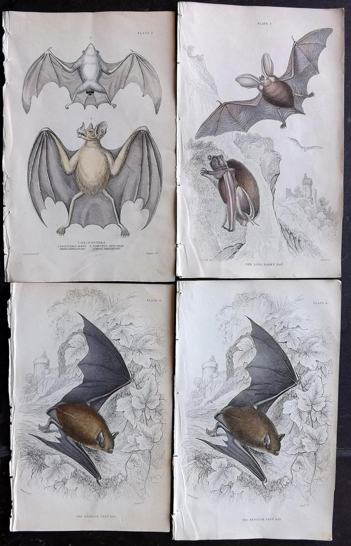 Jardine, William C1840 Lot of 4 Hand Col Prints. Bats