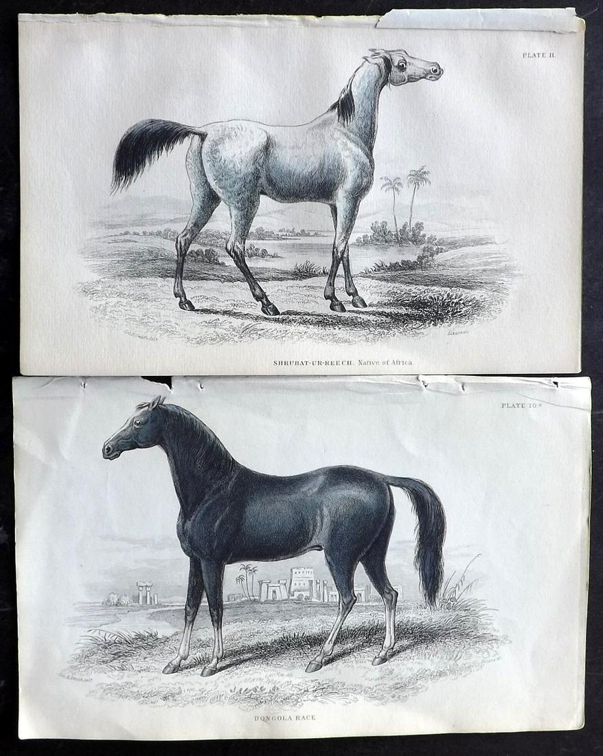 Jardine, William C1840 Pair of Hand Col Horse Prints