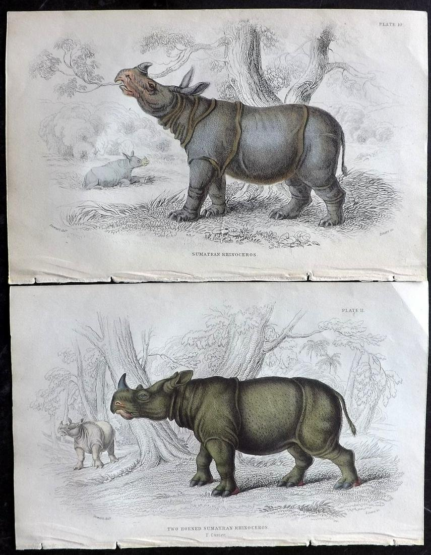 Jardine, William C1840 Pair of Hand Col Rhino Prints