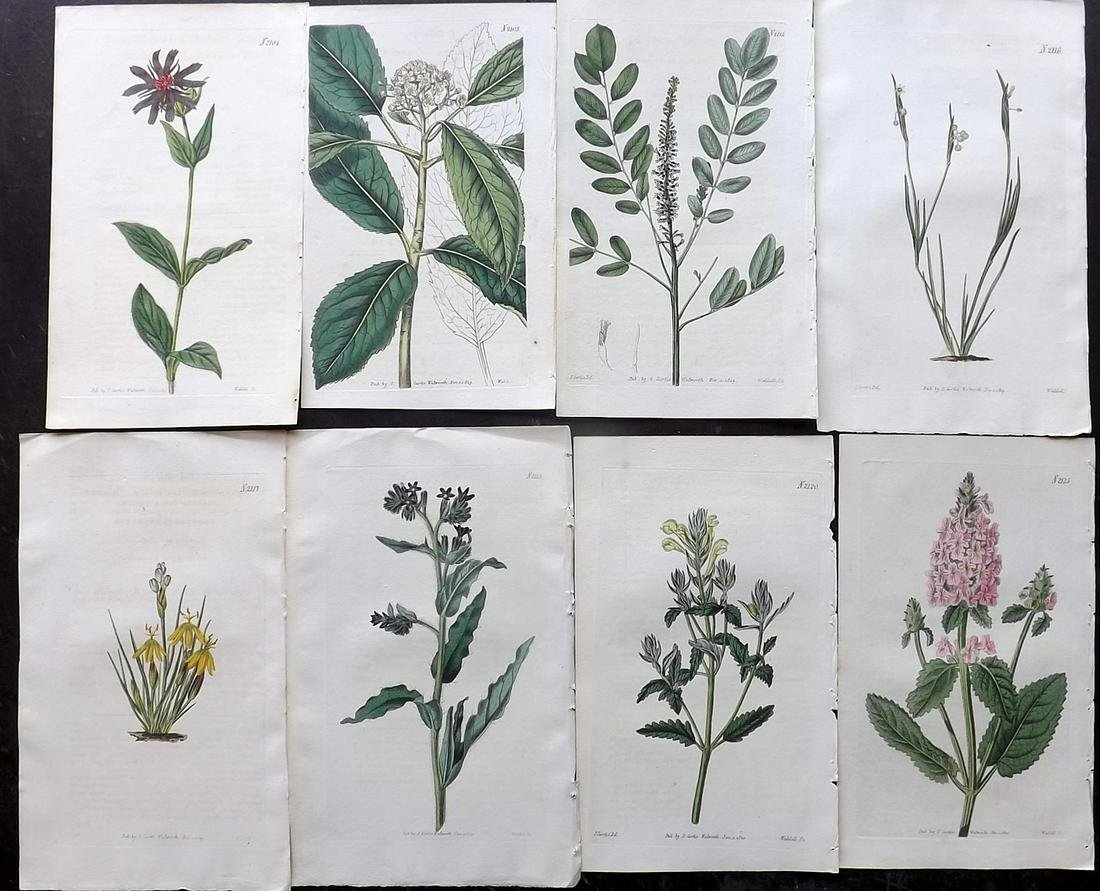 Curtis, William 1819-20 Lot of 8 HCol Botanical Prints