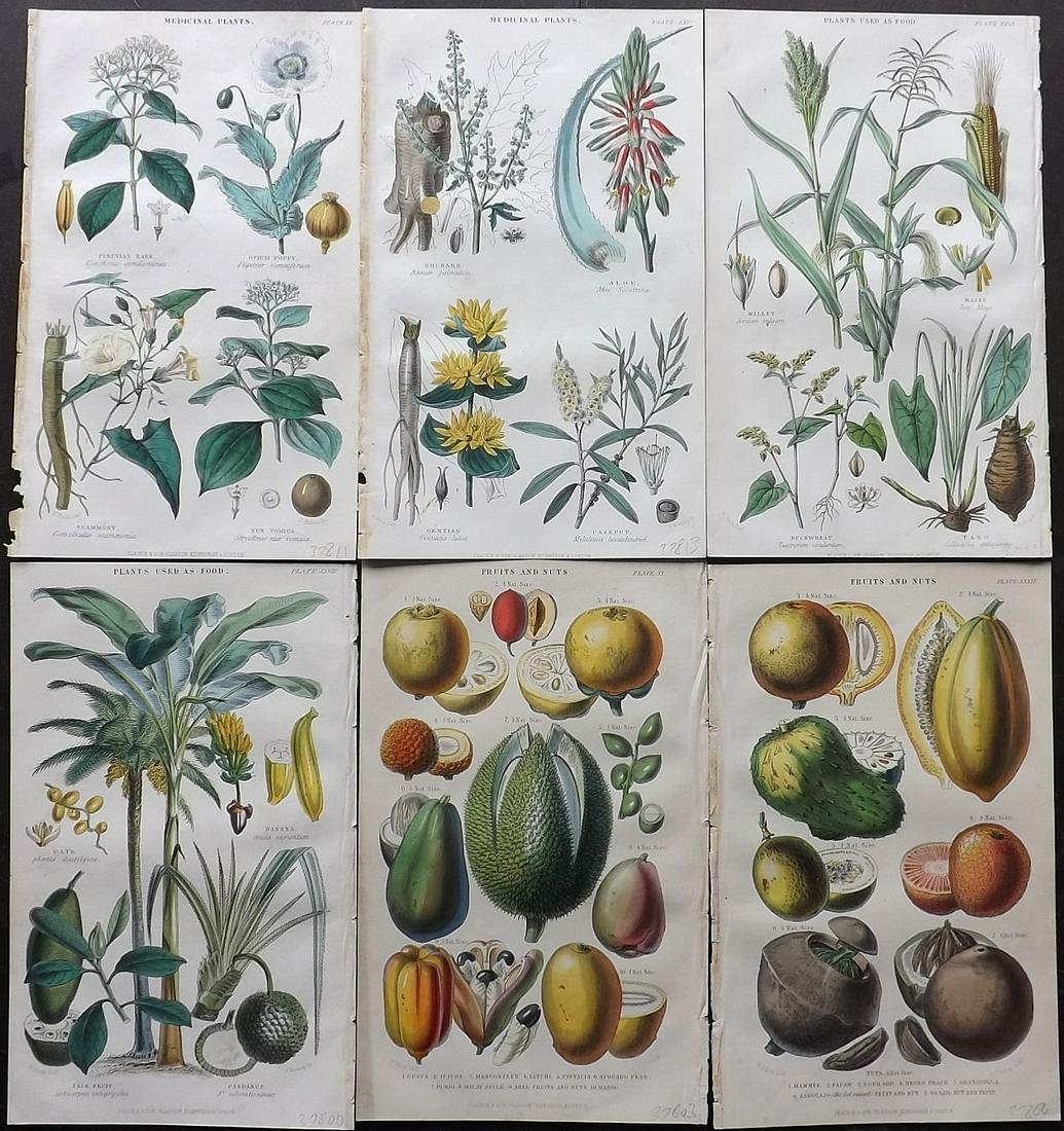 Rhind, William 1870 Lot of 6 Hand Col Botanical Prints