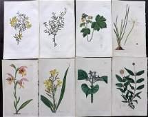 Curtis William 1825 Lot of 8 HCol Botanical Prints