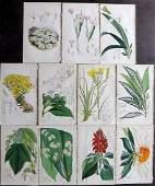 Curtis William 1840s Lot of 11 HCol Botanical Prints