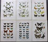 Kappel  Kirby C1895 Lot of 6 Butterfly Prints