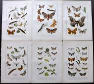 Kappel  Kirby C1895 Lot of 6 Moth Prints