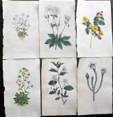 Curtis William 1790s Lot of 6 HCol Botanical Prints