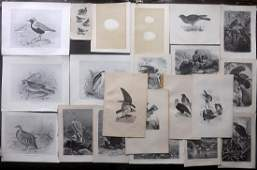 Birds  Eggs 19th Cent Mixed Lot of 22 Prints